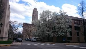 春のキャンパス (その1): 大学のシンボルを1ブロック裏手からパチリ。