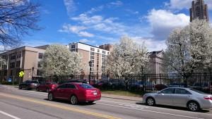 春のキャンパス (その2): 寒さがやっと緩んだ日、キャンパスにも花がきれいに咲いていました。