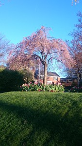 近所のお庭。